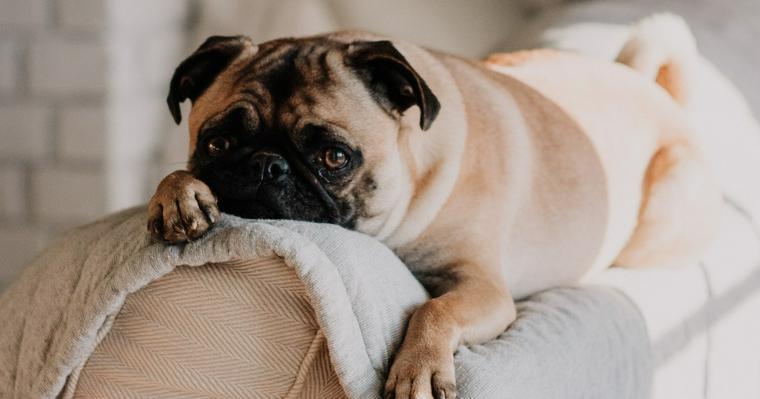 犬を無視するしつけの効果的なタイミングと時間は? 犬が飼い主を無視する理由も解説