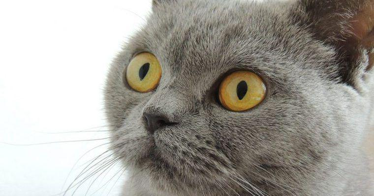 猫が嫌いな匂いとは? 柑橘系やアロマは要注意。しつけなど活用法も