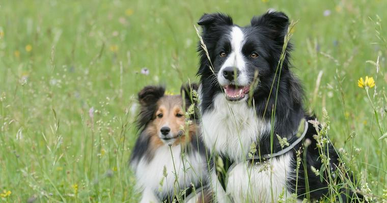 中型犬はしつけしやすい? 小型犬・大型犬との違いや、意識すべきポイントを解説