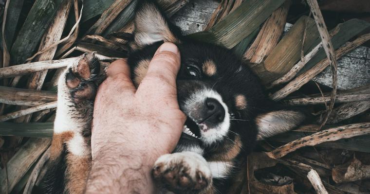 犬が飼い主を突然噛むようになった! 原因や対処法を獣医師が解説