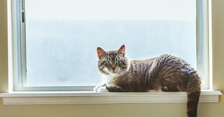猫も熱中症対策が必要! 熱中症の症状・応急処置などを獣医師が解説