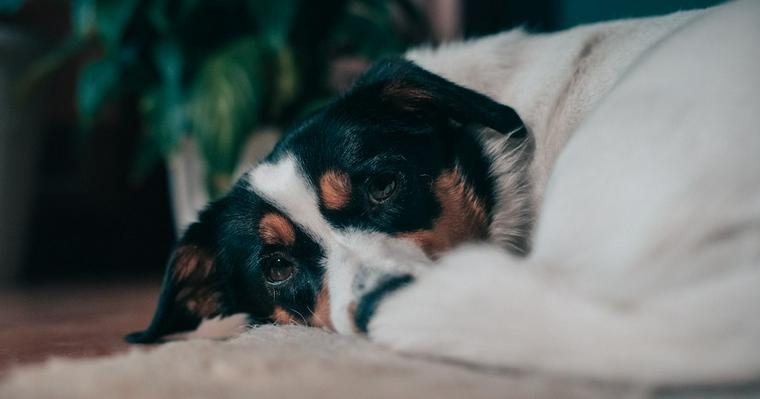 犬がごはんを食べないときの理由を獣医師が解説