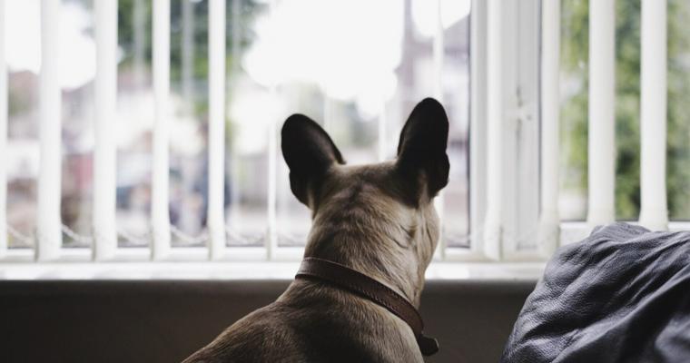 犬の分離不安とは? 原因や対策についてドッグトレーナーが解説