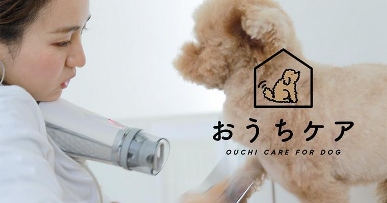 【動画で分かる】犬が嫌がらないドライヤーのやり方を現役トリマーが解説!頻度や温度などの注意点も