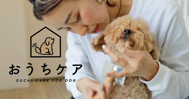 おうちで愛犬のブラッシングを。頻度やコツ、道具、嫌がる場合のやり方を紹介