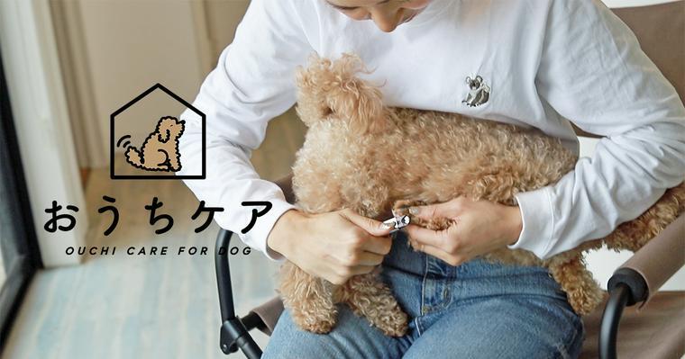 おうちでできる愛犬の爪切りのコツ。嫌がる場合の対処方や止血・頻度・値段まで
