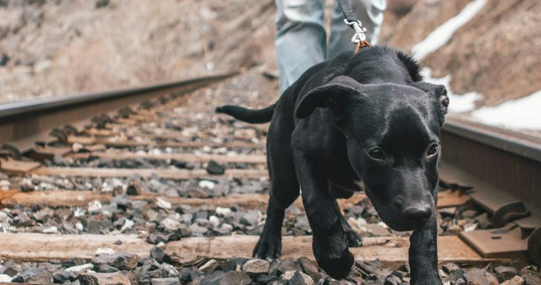 散歩中にリードを引っ張る愛犬をなんとかしたい! しつけ方や注意点について解説