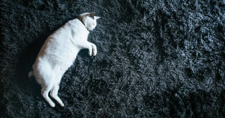 猫の睡眠時間はどれくらい? 長い理由や寝相からわかること、考えられる病気も