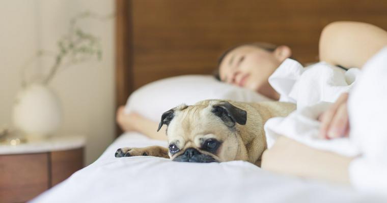 犬と一緒に寝るのはやめるべき? よくない理由や寝たがる心理、しつけや注意点を解説