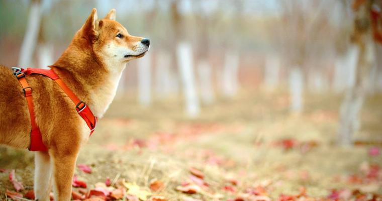 犬の秋! 編集部おすすめ紅葉・お出かけスポットや秋が旬な食べ物の注意点を紹介