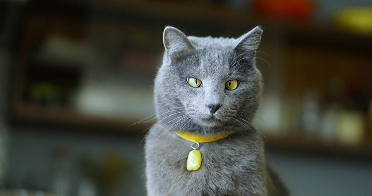 猫の首輪おすすめ7選|鈴付きのものから安全でおしゃれなものなどを紹介