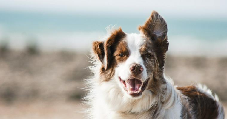 犬の暑さ対策は大丈夫? 室内と屋外、それぞれに適した方法を紹介!