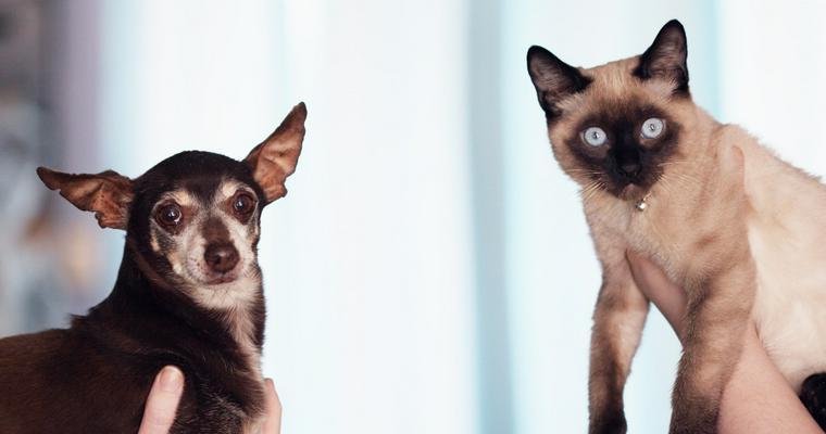 犬猫のヒアリ対策は大丈夫? 刺された時の症状や対処法、散歩の際の予防など