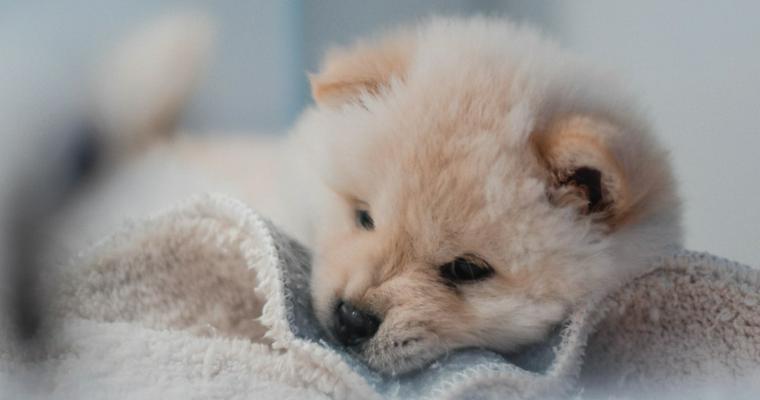 犬が甘噛みをする理由とは? 直し方やしつけ方について【トレーナー解説】