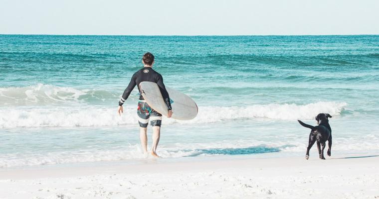 犬とサーフィンを楽しもう! 楽しみ方や注意点を大会や映画の動画と一緒に紹介