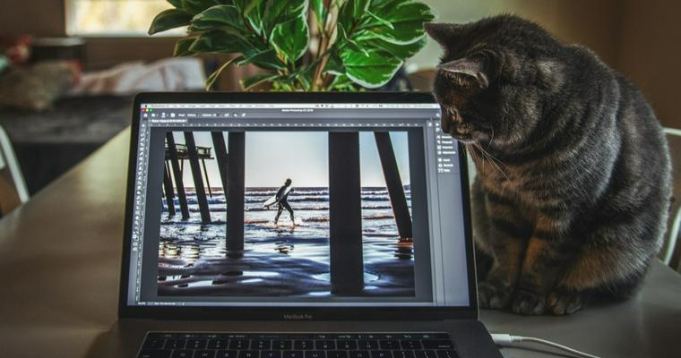 猫はなぜパソコンを邪魔してくるの? キーボードに乗る理由や対策を解説