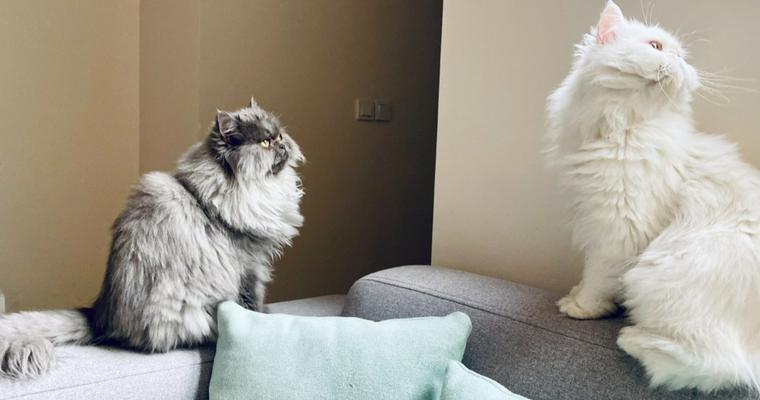 猫が喜ぶ部屋づくりを♪ 高さや仕切りの工夫から賃貸の注意点まで解説