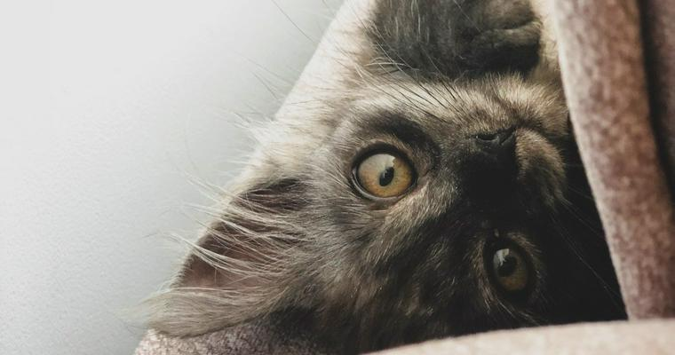 子猫の離乳食はいつから? 作り方や量、食べないときの食べさせ方を解説