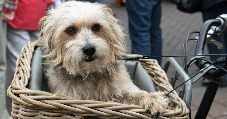犬を自転車に乗せて良いの? 注意点や安全に楽しむためのグッズを紹介