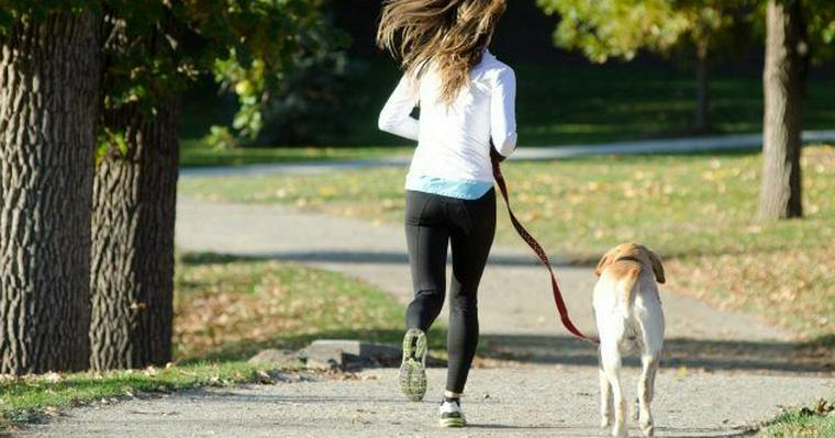 愛犬とランニングを楽しもう! 走れる距離や必要なしつけ、リードなどのおすすめグッズを紹介