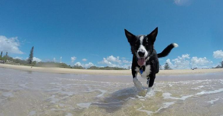 犬との水遊びの楽しみ方|水嫌いな犬の慣れさせ方と熱中症などの注意点