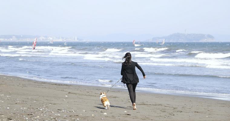 今年の夏は愛犬と旅行できる? 「ペットと泊まれる宿」に現在の状況を聞きました。