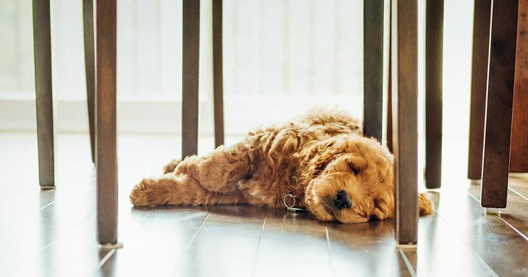 愛犬が夏バテ? ご飯を食べない。元気がない。など症状と対策について解説