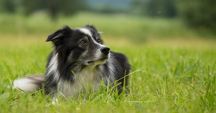 犬の蚊対策とは? フィラリアや予防薬について獣医師が解説