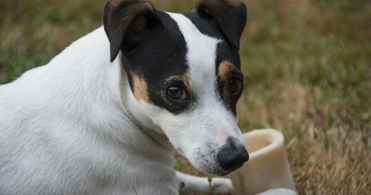 犬に骨を与える際は要注意! 犬が骨を好きな理由やメリットなどを紹介