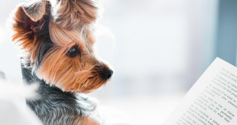 犬に尿検査は必要? 検査方法や結果の見方などを獣医師が解説