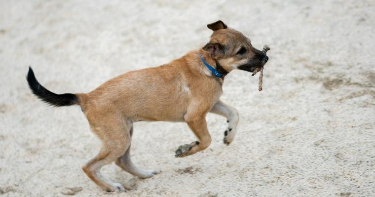 犬と「木の棒」で遊ぶのは危険? 英国獣医師が警鐘