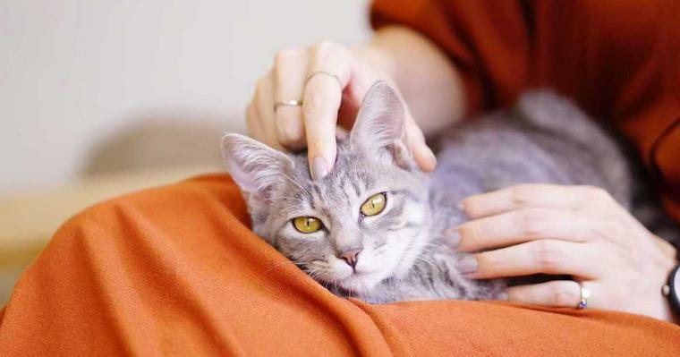 なぜ猫はゴロゴロ喉を鳴らすの? 機嫌が良いだけではなかった意外な理由