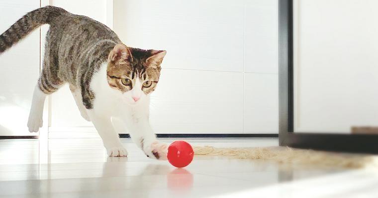 愛猫と上手に遊ぼう! 正しい遊び方や遊ぶ時間、アプリや手作りおもちゃを動画で紹介