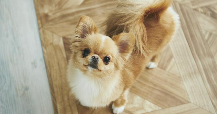 「犬の十戒」は犬からのメッセージ。飼い主として犬を迎えるとき誓いたい、命の約束です。