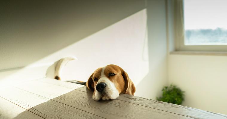 愛犬のため息にはどんな意味や理由があるの? 安心しているときだけではない病気の可能性も