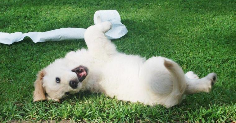 犬がティッシュを食べてしまったら その危険性と対策