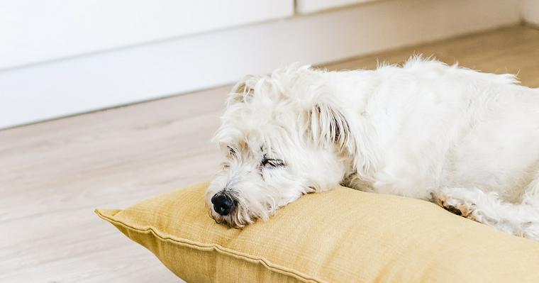 犬を預けるときに必要なこと|長期利用の負担軽減法やホテル施設の特徴を紹介