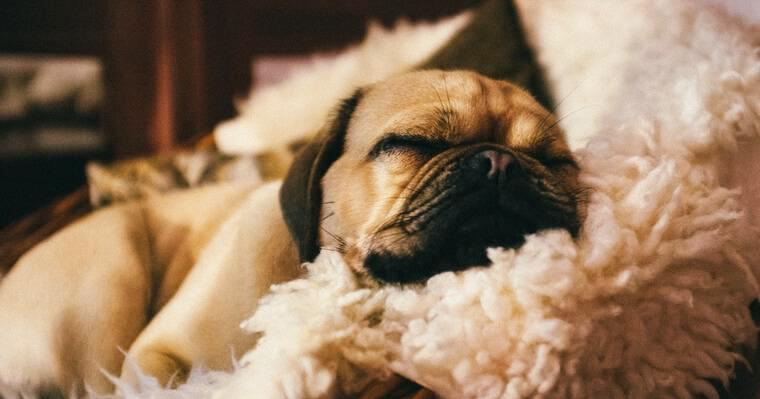 一人暮らしで犬を飼う方法 かかる費用や仕事中の留守番など注意点を解説