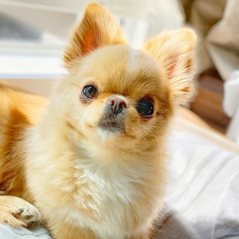 犬のレプトスピラ症|種類・感染経路・症状・予防法などを感染症担当獣 ...