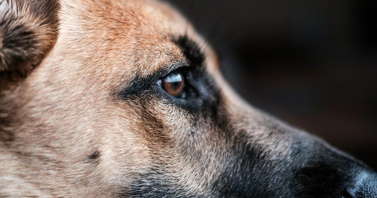 使役犬ってどんな犬? 人のために働く犬の種類や仕事について紹介
