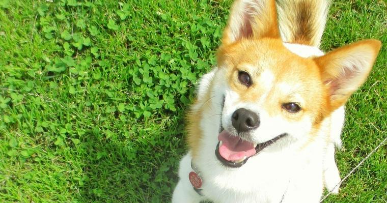 犬の捻挫|足をかばっているときは要注意! 整形外科担当医が解説