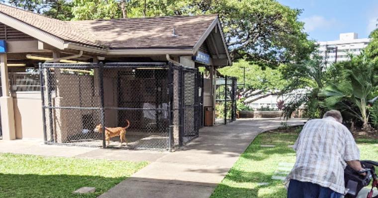ハワイで犬や猫との出逢い方を見てきました。ヒューマンソサエティ取材レポート