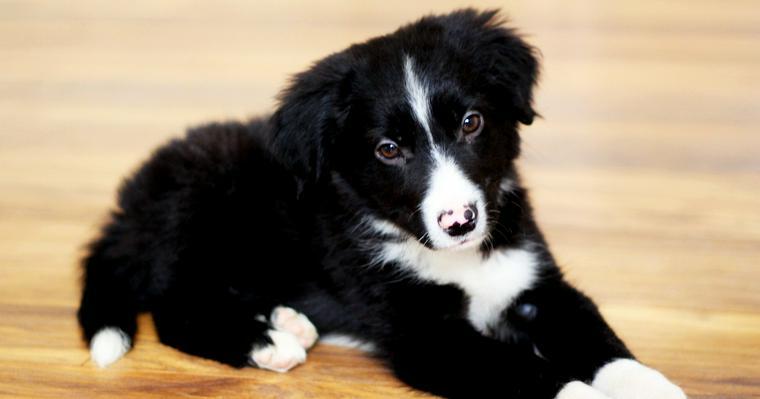 犬の皮膚糸状菌症とは? 症状や治療・予防方法などを皮膚科認定獣医師が解説