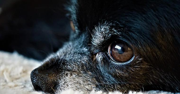 犬に目薬を差す方法とは? 目のケアの必要性を獣医師が解説