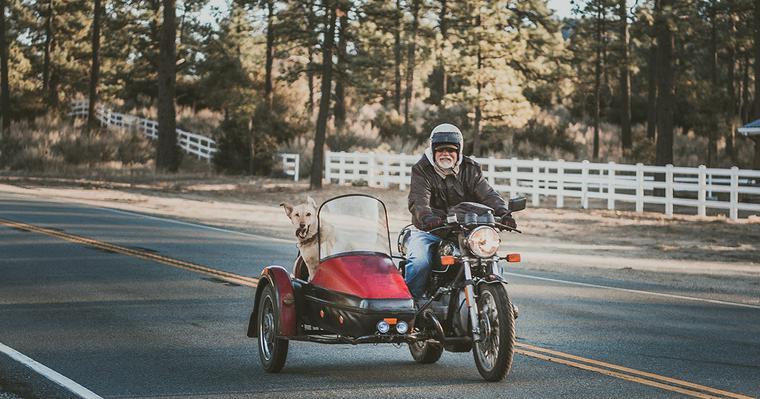 犬をバイクに乗せることはできる? ヘルメットやゴーグルなどツーリンググッズを紹介