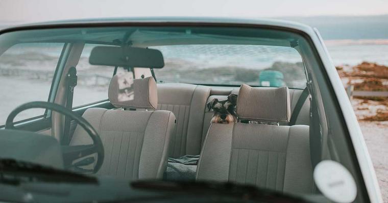 レンタカーでもペットの同乗可能! 上手に利用して気軽なお出かけを