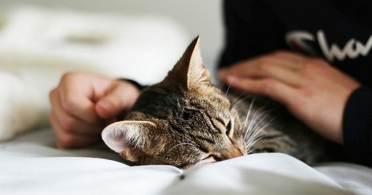 猫のブラッシング|手袋などブラシの選び方から頻度や効果まで【プロが解説】