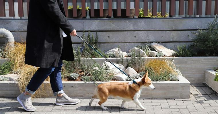 犬の散歩時間はどれくらい? 時間帯や回数についても解説