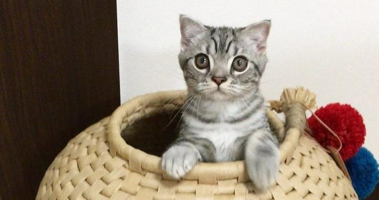 猫ちぐらの中は快適すぎ!? 猫が喜ぶちぐらの作り方や入手方法は?