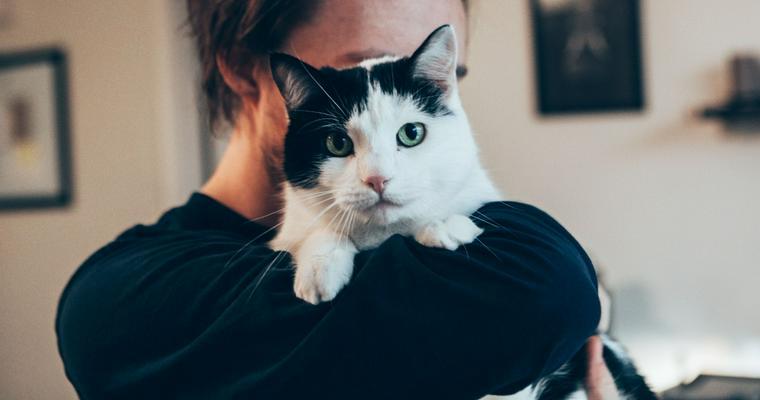 猫を抱っこしたい人は必見! 正しいやり方や嫌がる理由を解説